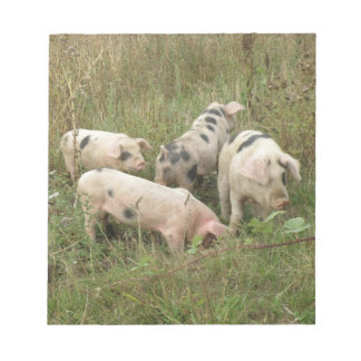 Pigs in a Field Notepad