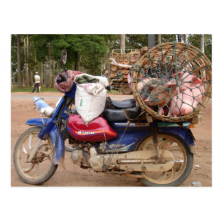 Pigs on motorbike-Cambodia Postcard
