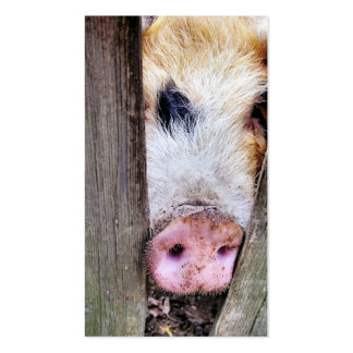 PIGS PACK OF STANDARD BUSINESS CARDS