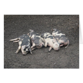 Pigs sleeping card
