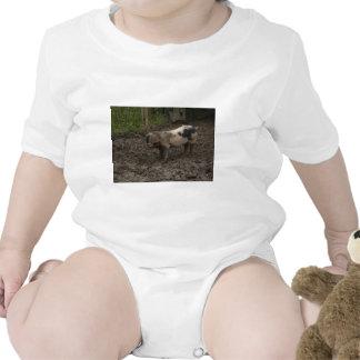 Pigs Tshirts