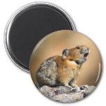 pika 6 cm round magnet