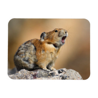 Pika Howling Rectangle Magnets