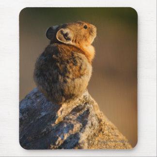 pika mouse mat