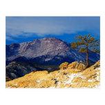 Pikes Peak and Lone Tree Postcard