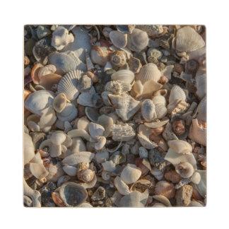 Pile Of Seashells Wood Coaster