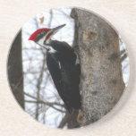 Pileated Woodpecker Beverage Coaster