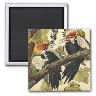Pileated Woodpecker, John James Audubon Square Magnet