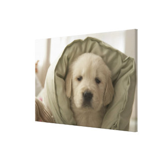 Pillow around dog canvas print