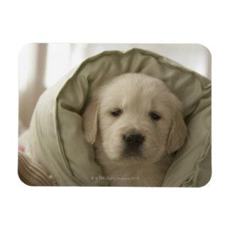 Pillow around dog magnet