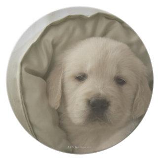 Pillow around dog plate