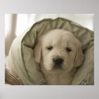 Pillow around dog poster