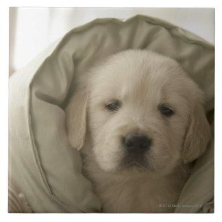 Pillow around dog tile