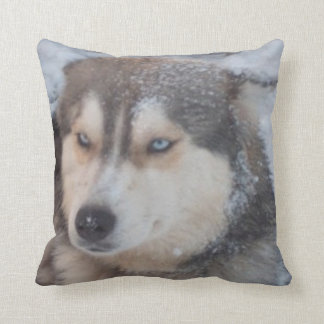 Pillow Husky Blue Eyes In The Snow, Blue Back Cushion