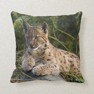 pillow - lynx