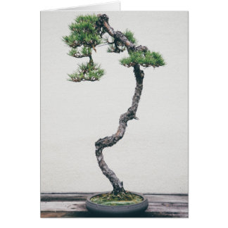 Pine Bonsai Card