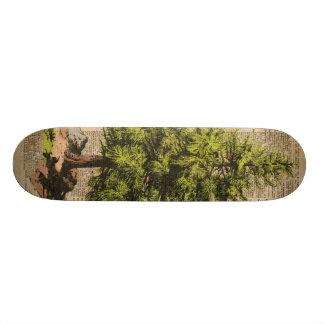 Pine,Cedar Tree,Christmas Tree Dictionary Art, Skate Board
