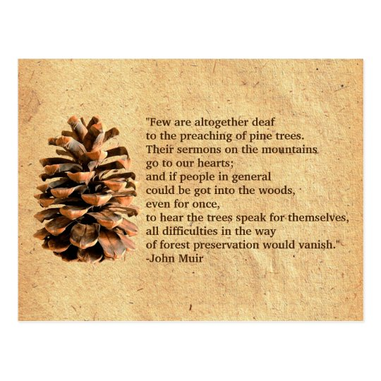 Pine Cone And John Muir Quote Postcard