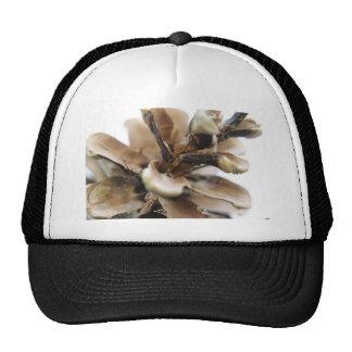pine cone cap