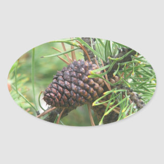 Pine Cone in Yellowstone Oval Sticker