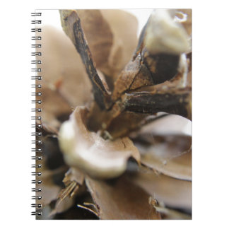 pine cone note book