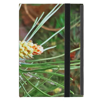 Pine cone tree needles photograph cover for iPad mini