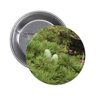Pine Cones 6 Cm Round Badge