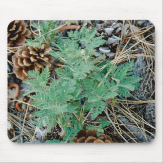 Pine Cones and Fern Mousepad