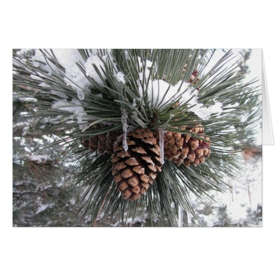 Pine cones in snow card