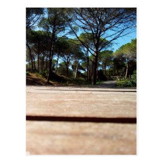 Pine forest at the beach Alghero, Sardinien Postcard