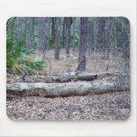Pine Forest Dead Logs Mouse Pad