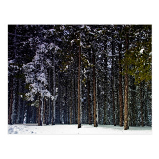 pine Forest with snow winter-Cyprus Postcard