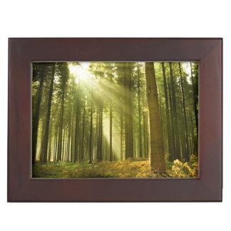 Pine forest with sun shining keepsake box