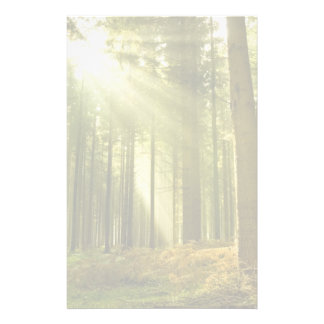 Pine forest with sun shining stationery