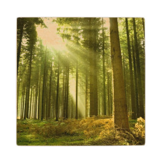 Pine forest with sun shining wood coaster