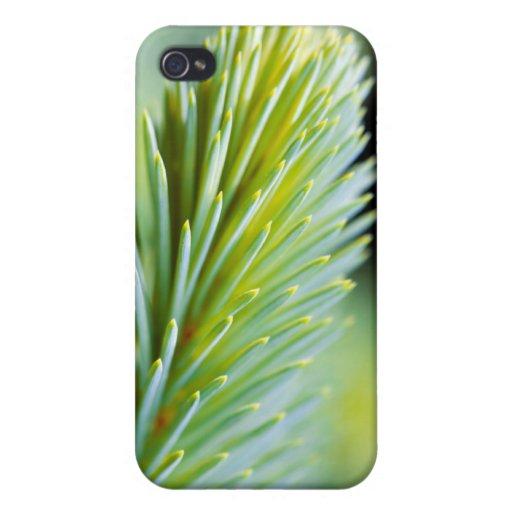 Pine Macro iPhone 4 Covers
