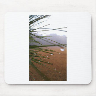 Pine needles with dewdrop tips mouse pad