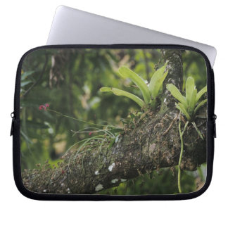 Pine Pink, Bletia purpurea, blooming on Mango Laptop Sleeve