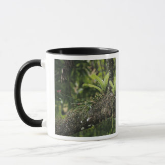 Pine Pink, Bletia purpurea, blooming on Mango Mug