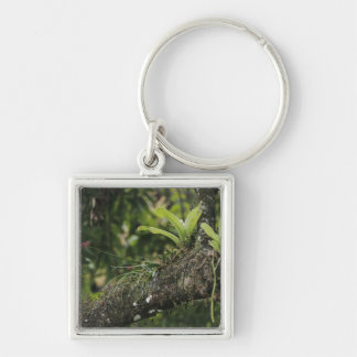 Pine Pink, Bletia purpurea, blooming on Mango Silver-Colored Square Key Ring