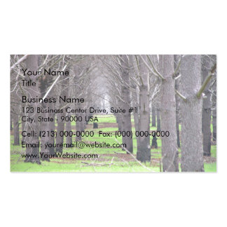Pine plantation covered by grass pack of standard business cards