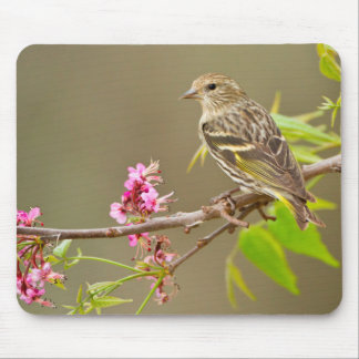 Pine Siskin (Spinus Pinus) Adult Perched Mouse Mat