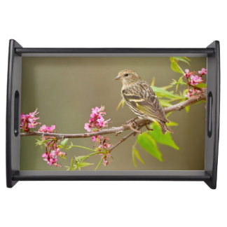 Pine Siskin (Spinus Pinus) Adult Perched Serving Tray
