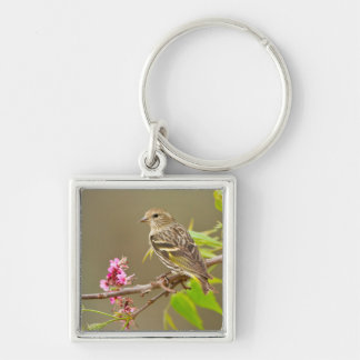 Pine Siskin (Spinus Pinus) Adult Perched Silver-Colored Square Key Ring
