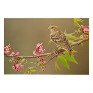 Pine Siskin (Spinus Pinus) Adult Perched Wood Wall Art