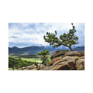 Pine Tree and Snow Capped Mountains Stretched Canvas Print
