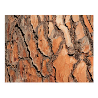 Pine Tree Bark Texture Postcard