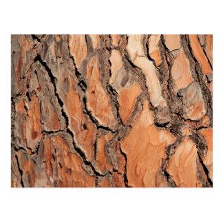 Pine Tree Bark Texture Postcard