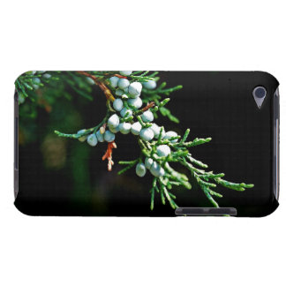 Pine Tree Branch Barely There iPod Covers