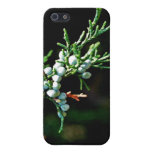 Pine Tree Branch Case For iPhone 5